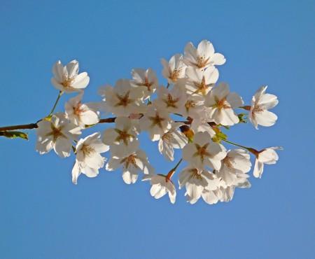 Nagy Ildikó: Tavasz