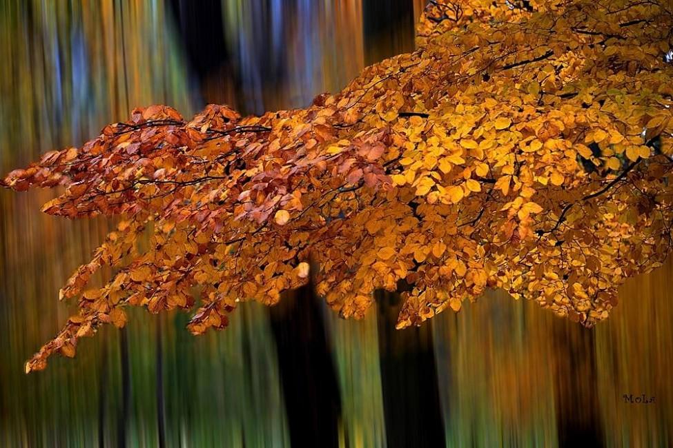 Monoki László: Varázslatos ősz