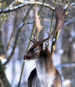 Sándor Péter János: Az erdő hercege