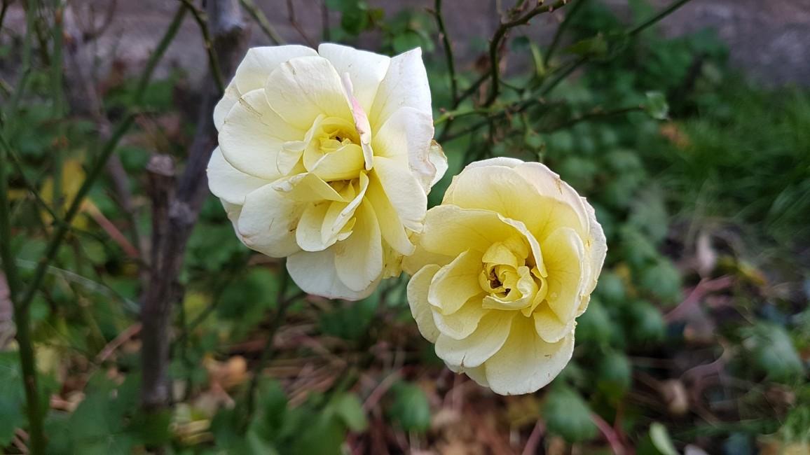 Eckhardt Ágnes: Tavasz a télben