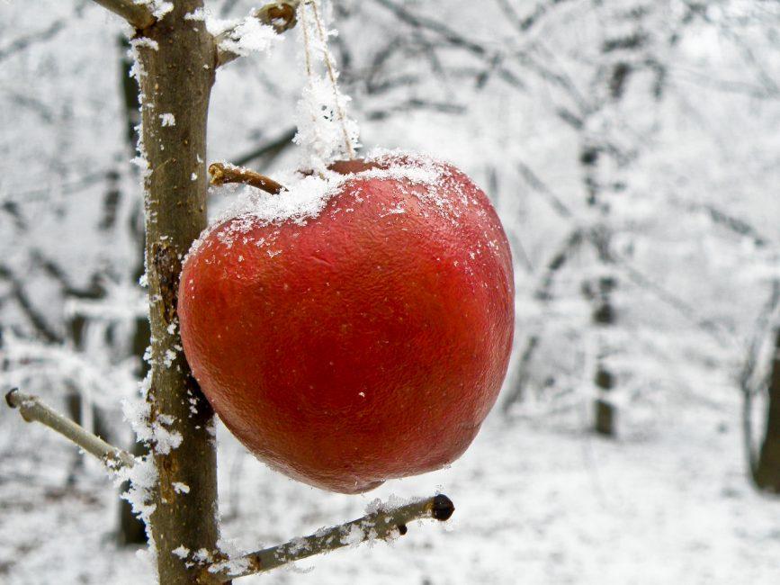 André Zsuzsa: Téli alma