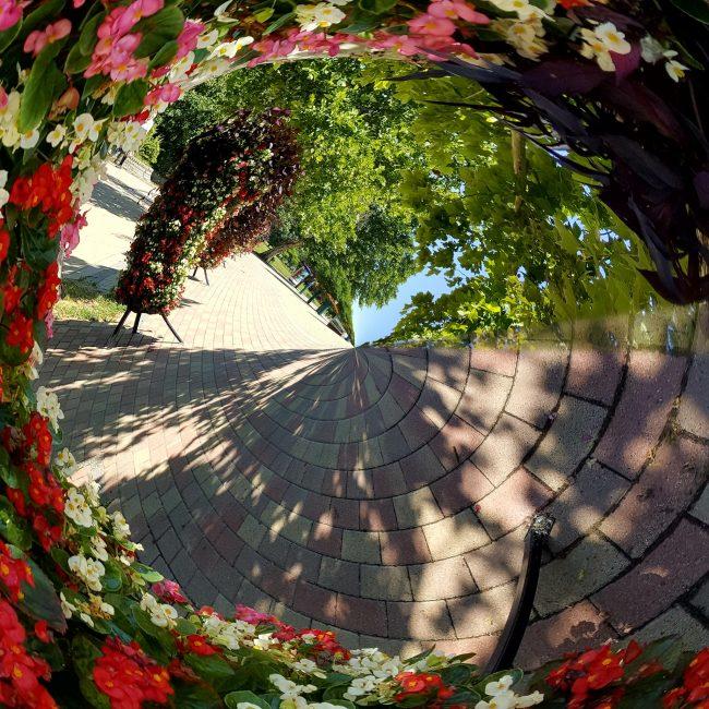 Jakucs Anna: Csobánka téri virágkavalkád