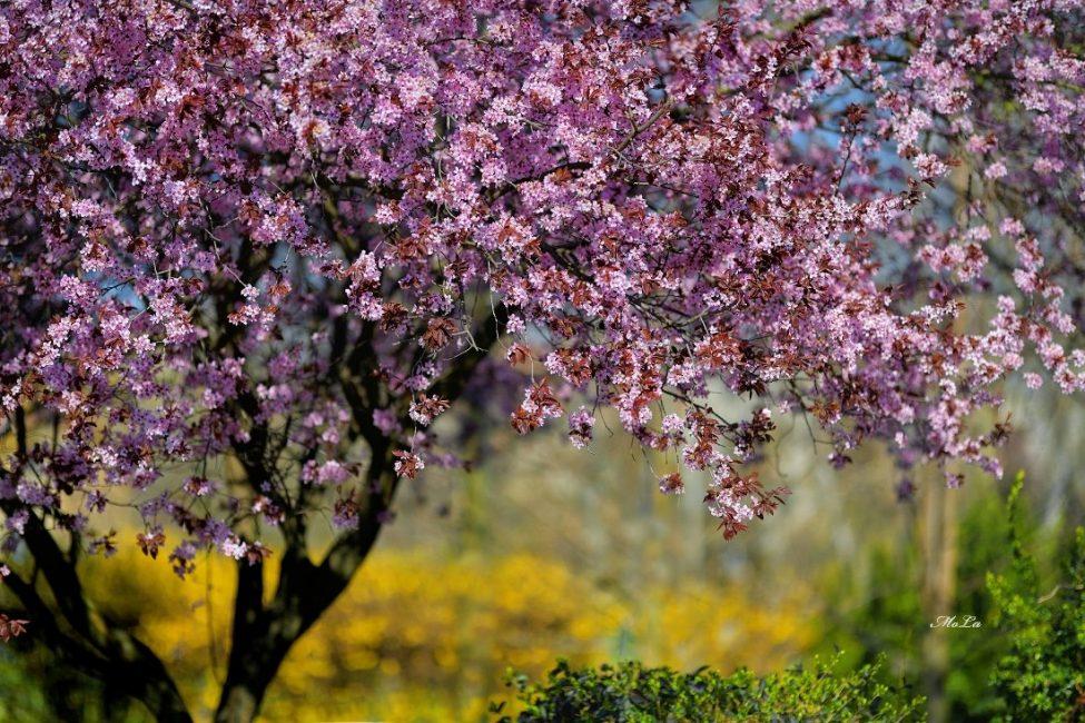 Monoki László: Csalogat a tavasz