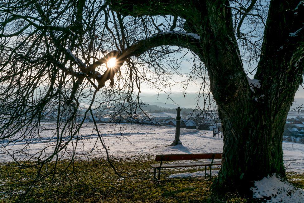 André Zsuzsa: A szentléleki hársfa