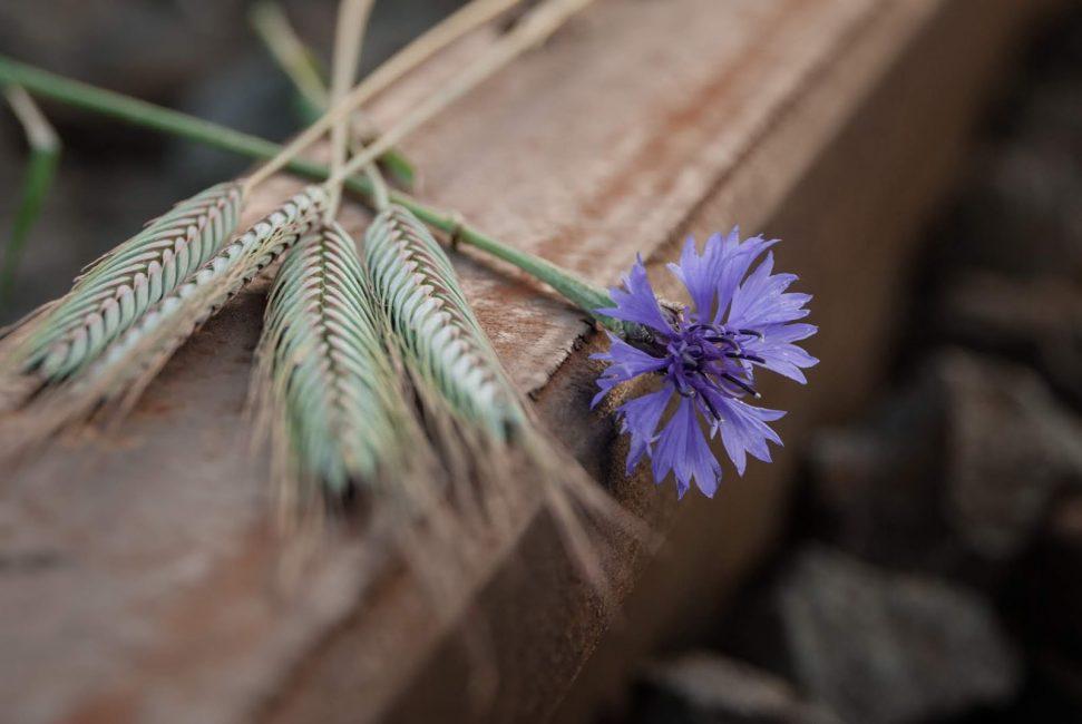 André Zsuzsa: Búza, virág