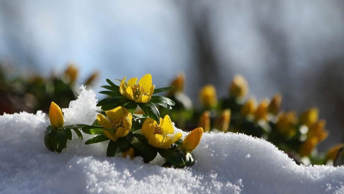 Borsné Katalin: …hó temette téltemető…
