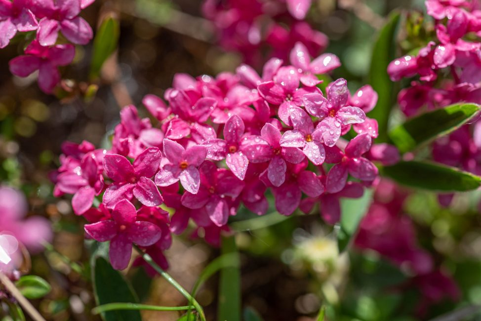 André Zsuzsa: Cserevirág (védett növény)